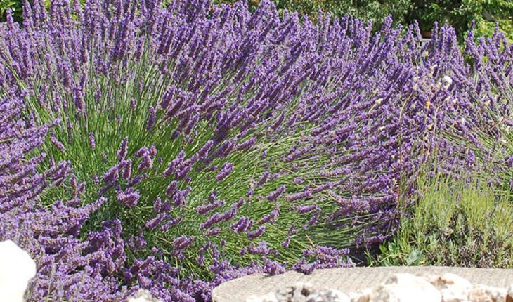 Dekorative Terassenpflanzen