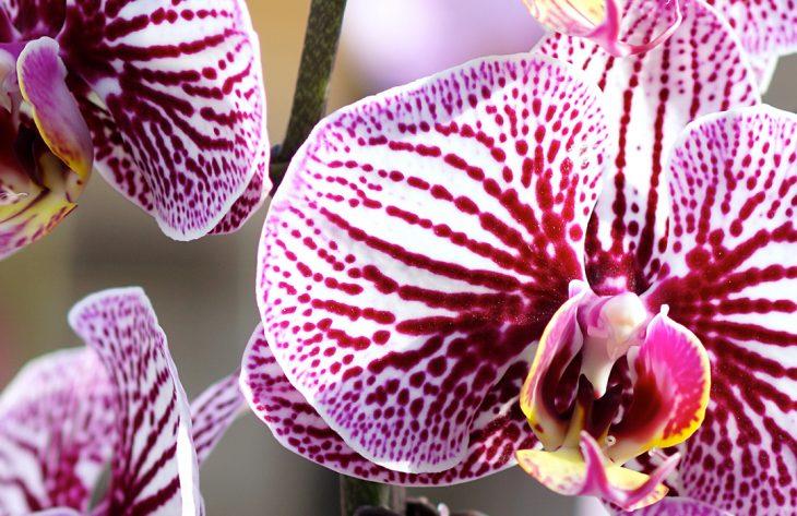 Orchideen umtopfen