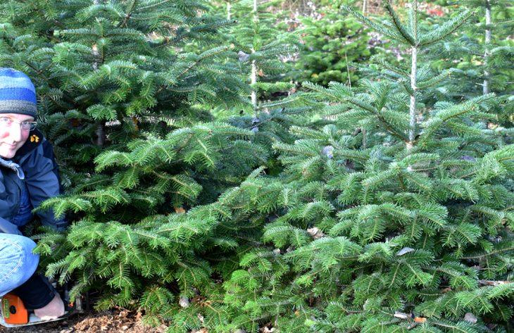 Schmuckgrün & Weihnachtsbäume aus Eitorf
